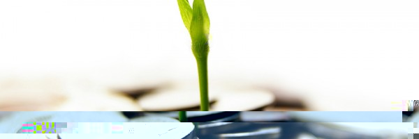Процес на формиране на организационни ценности и практики при новостартирали компании